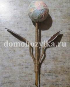 kofejnoe-derevo_9